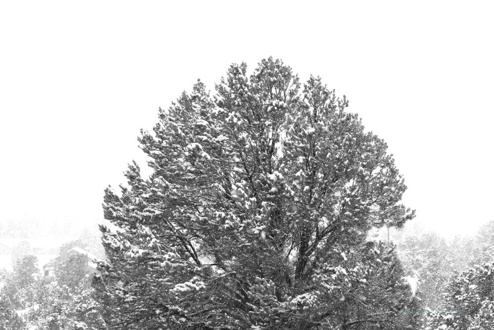big tree big snowflakes