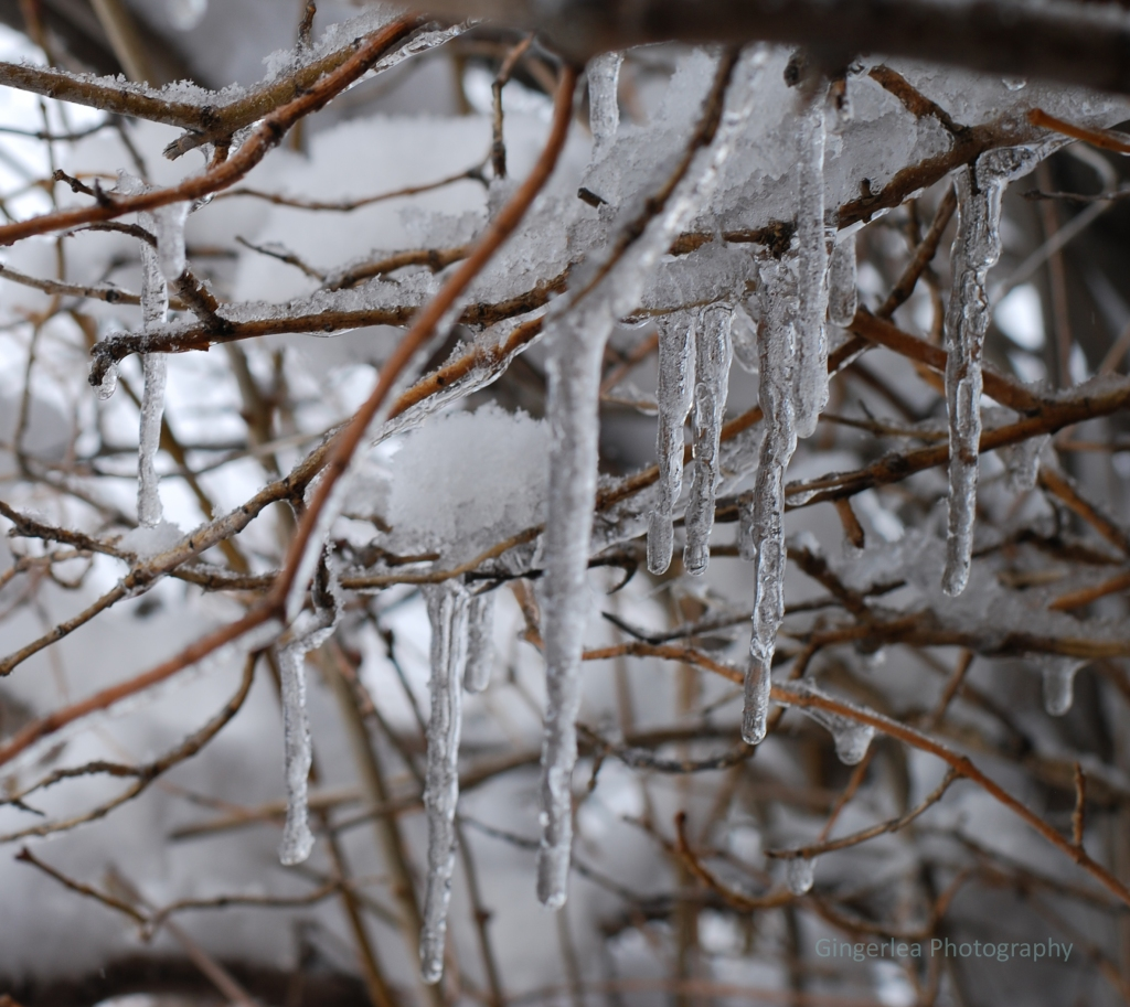 icicle focus