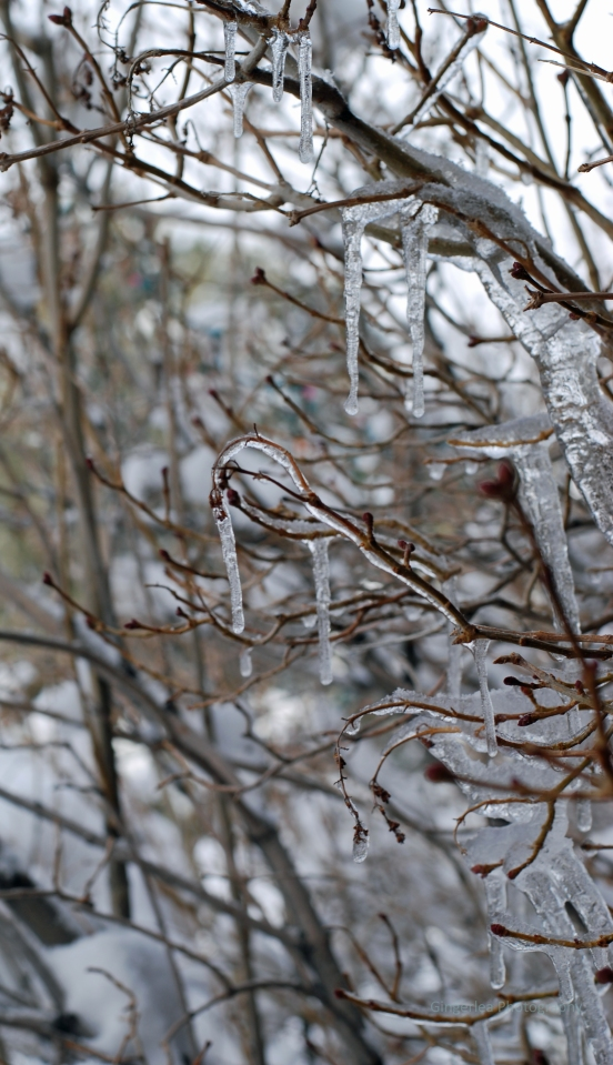 small icicle drips