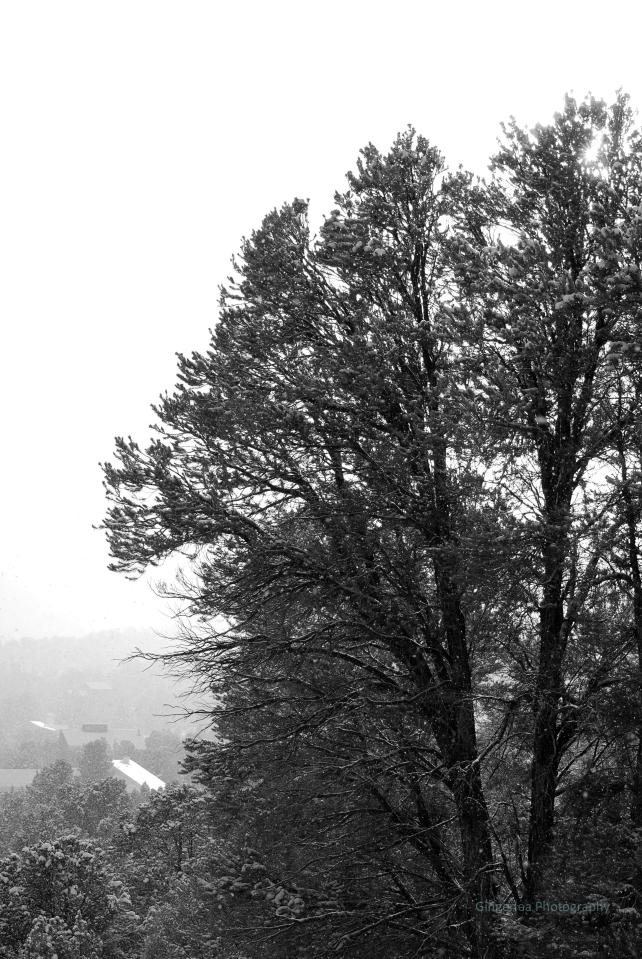 split tree bw