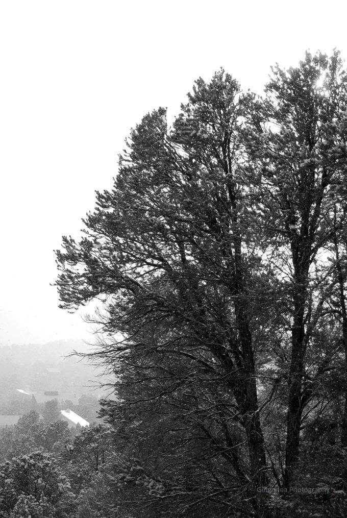 split tree bw