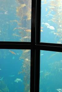 aq kelp forest