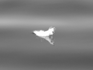 bw feather