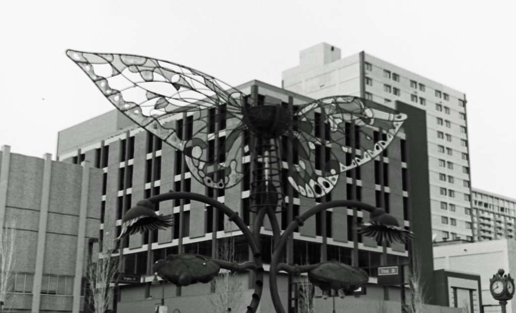 downtown butterfly