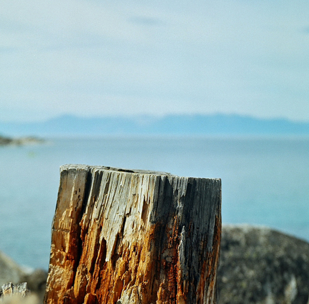 I like the depth of field that the Yashica allows.   Today was a fun-focus day.