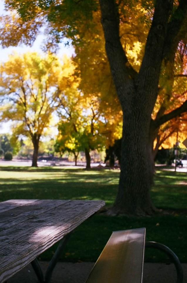 autumn picnic table