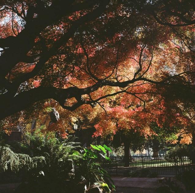 autumn tree silouette