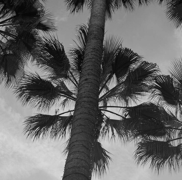 bw palm closeup