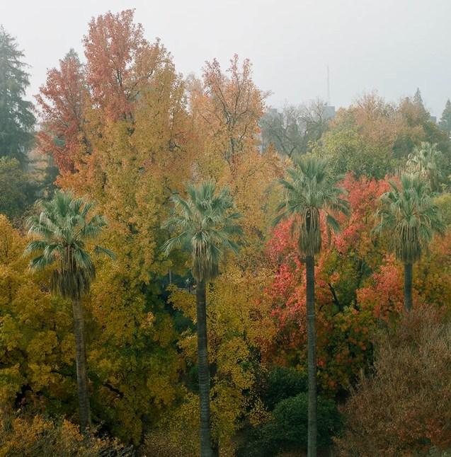 park colors w palms