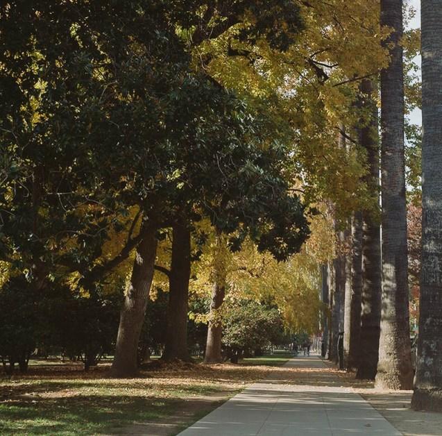 tree lined walk